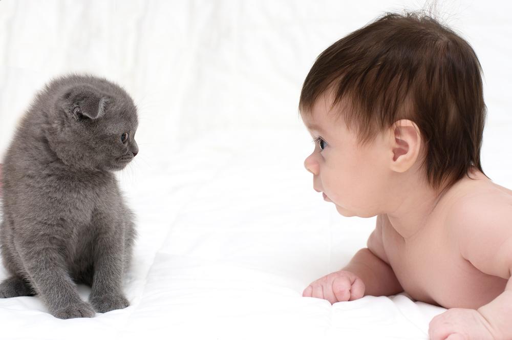 gatto e bambino