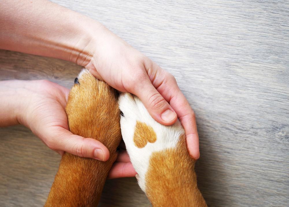 legame tra animali e proprietari