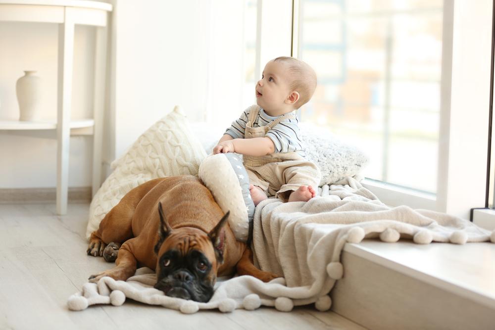 cagnolino e bambino