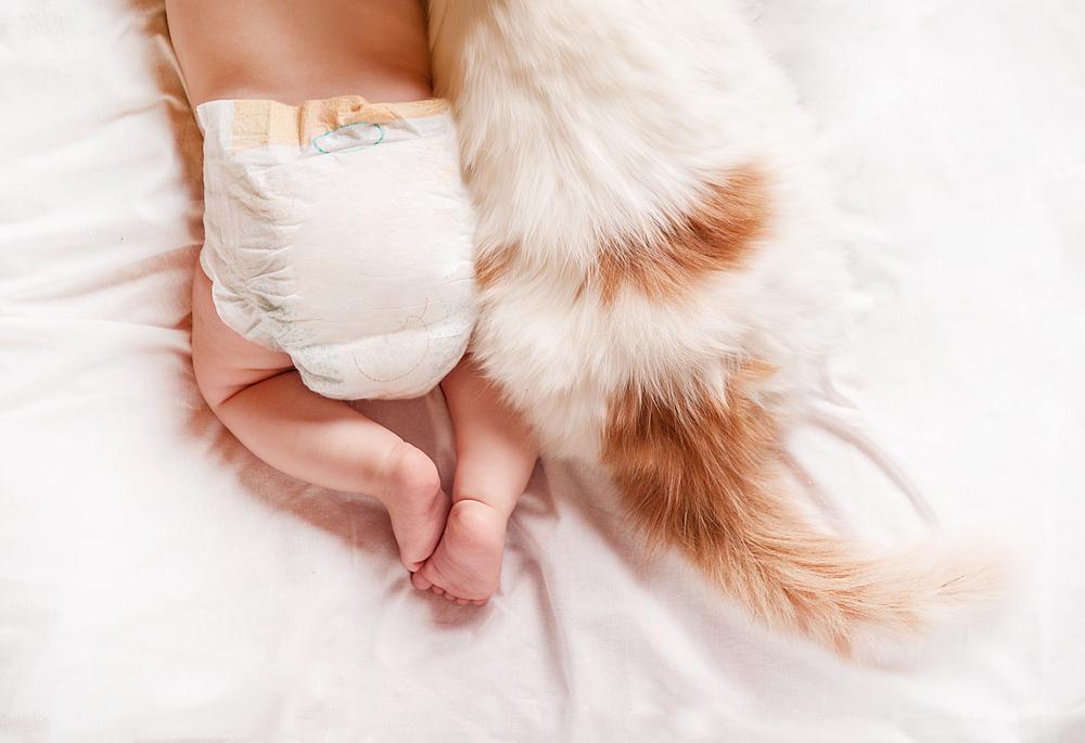neonato e gatto come convivere serenamente e senza problemi