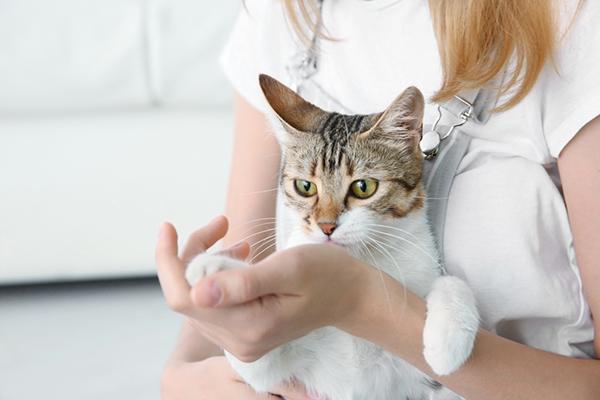 donna incinta con gatto. gravidanza e gatto. rischi e soluzioni